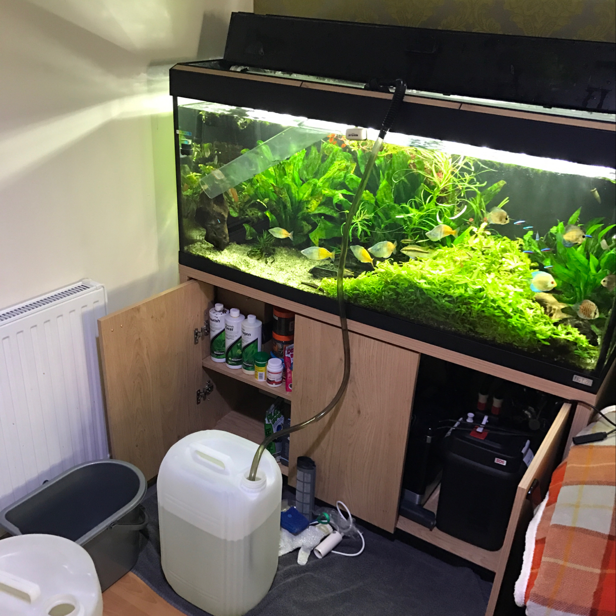 My Aquarium on Apr 8, 2017