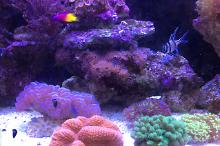 LPS & softies minimalistic reef on May 23, 2017