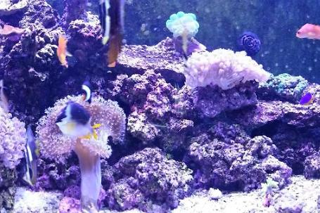 My Aquarium no 2 Thumbnail