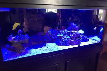 Victoria's 75gal Reef on Aug 13, 2017