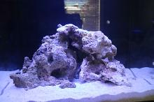 Innovative Marine 40 Gallon Fusion Thumbnail