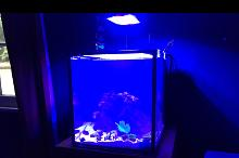 Kamdens 10 Gallon on Aug 28, 2017