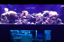 180 Reef on Aug 29, 2017