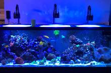 180 Gallon Mixed Reef on Oct 2, 2017
