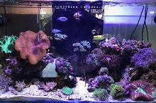 Dave's Reef Tank on October 3, 2017