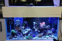 Shop aquarium Thumbnail