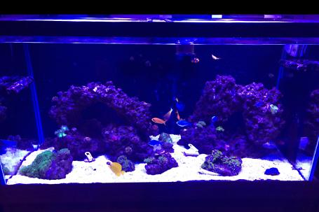 Henwood Family Farms - Reef Tank Thumbnail