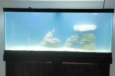 75 Gallon Beginner Reef Thumbnail