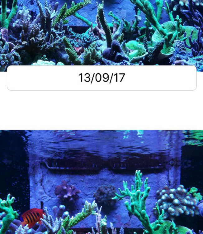 2901reef on Oct 31, 2017