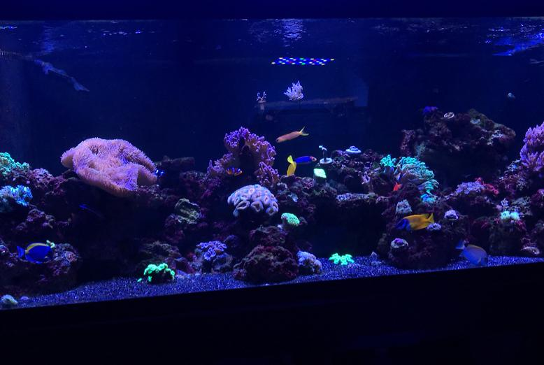180 Reef on Nov 5, 2017