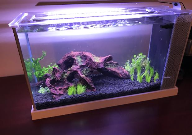 Fluval Spec V on Nov 14, 2017