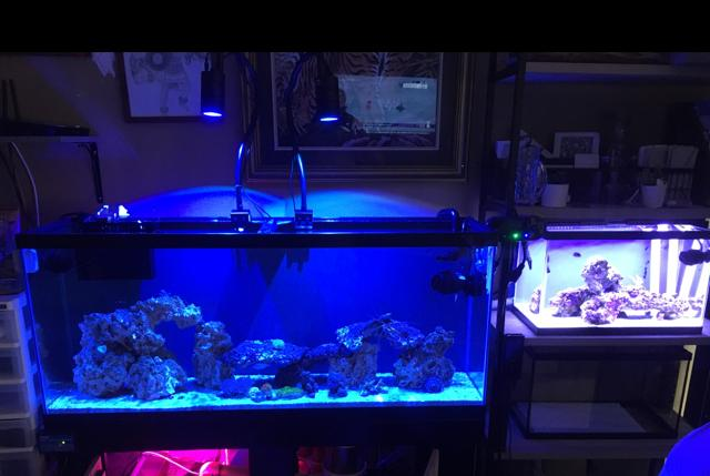 55 gal on Nov 30, 2017