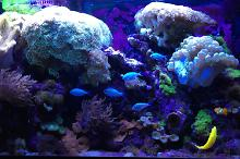 My Aquarium on Dec 17, 2017