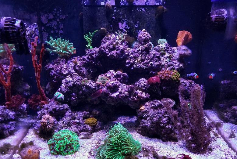 Mixed Reef on January 9, 2018