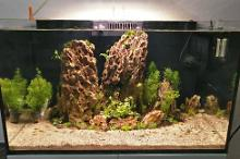 Reefer 250 Planted tank Thumbnail