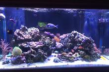 120 gallon reef  Thumbnail