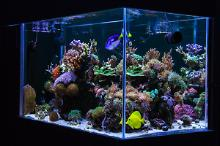My 250l home reef Thumbnail