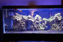 20 gal long reef Thumbnail