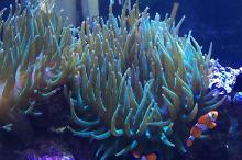 Active Reef Thumbnail