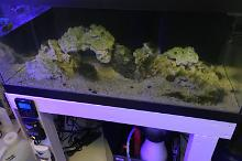 40G Reef on May 11, 2018