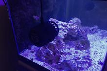 40G Reef on May 12, 2018