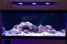 40G Reef on May 13, 2018