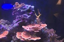 110 gallon mixed reef  Thumbnail
