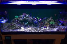 40G Reef on Aug 1, 2018