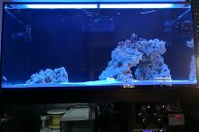 Ventino's reef on Aug 5, 2018