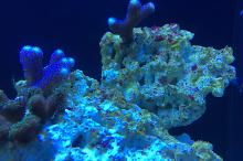 Ventino's reef on Aug 8, 2018