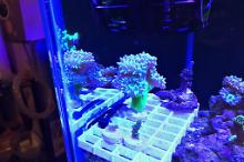 40G Reef on August 21, 2018