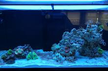 Ventino's reef on Aug 22, 2018