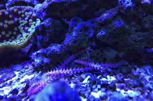 40G Reef on August 24, 2018