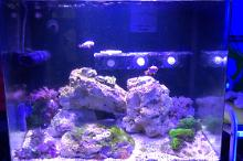Kisha Red Sea Tank Thumbnail