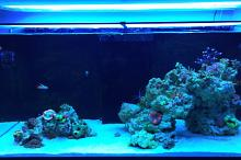 Ventino's reef on Sep 6, 2018
