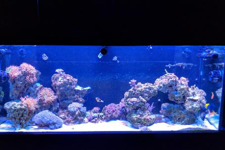 120 Gallon Mixed Reef Thumbnail