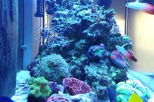 Ventino's reef on Sep 30, 2018