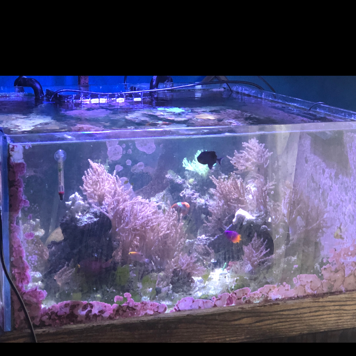 96G Mixed Reef on Sep 30, 2018