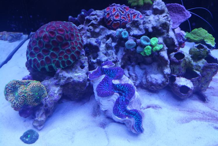 Ventino's reef on Oct 5, 2018