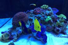 Ventino's reef on Oct 9, 2018