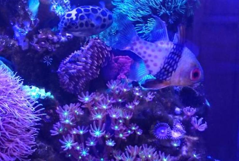 staying-still PAJAMA CARDINALFISH