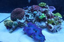 Ventino's reef on Oct 22, 2018