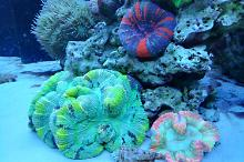 Ventino's reef on Oct 26, 2018