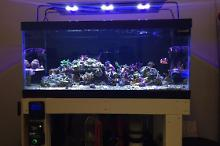 40G SPS Reef on Oct 28, 2018