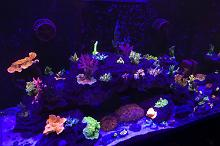 Red Sea Reefer 250 SPS Reef Thumbnail