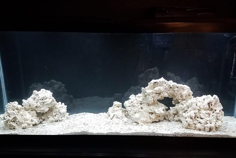 My Aquarium on January 4, 2019