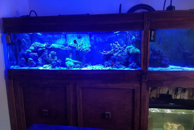 My Aquarium on January 7, 2019