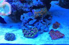 Ventino's reef on Jan 10, 2019