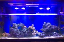 Living Room Reef Thumbnail