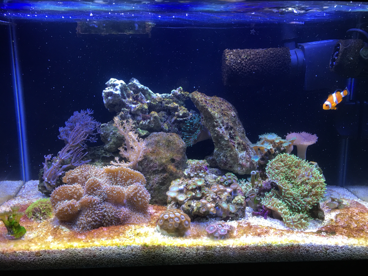 10 gallon Nano on Feb 6, 2019